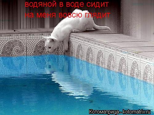 Котоматрица: водяной в воде сидит на меня вовсю глядит