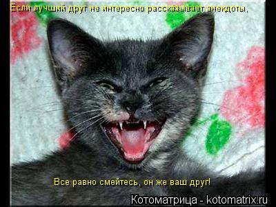 Котоматрица: Если лучший друг не интересно рассказывает анекдоты, Все равно смейтесь, он же ваш друг!