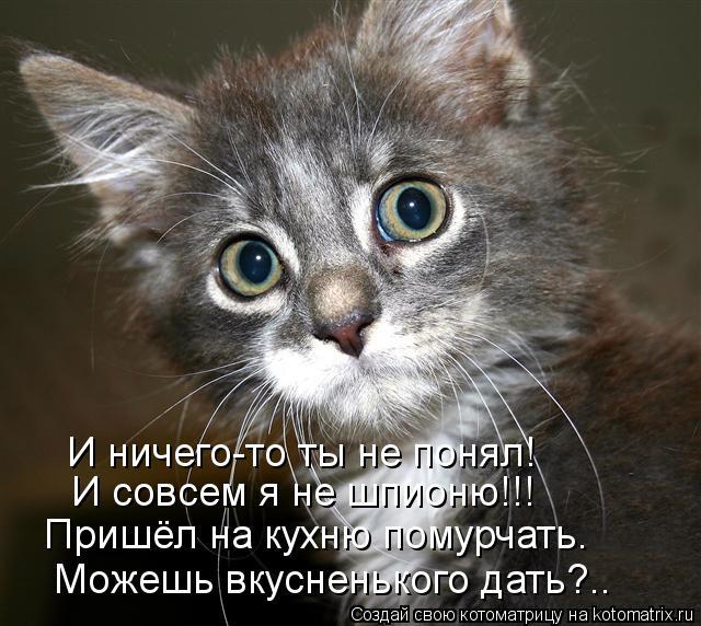 Котоматрица: И ничего-то ты не понял! И совсем я не шпионю!!! Пришёл на кухню помурчать. Можешь вкусненького дать?..