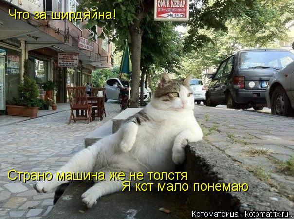 Котоматрица: Что за ширдяйна! Страно машина же не толстя Я кот мало понемаю