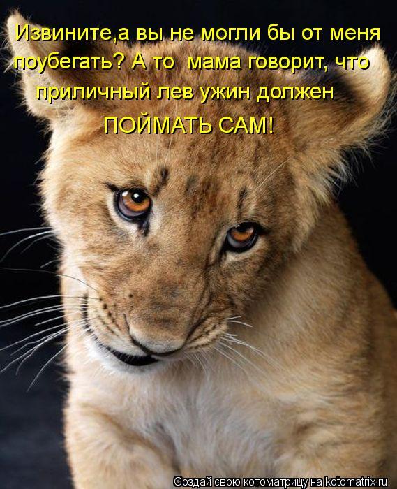 Котоматрица: Извините,а вы не могли бы от меня  поубегать? А то  мама говорит, что  приличный лев ужин должен  ПОЙМАТЬ САМ!