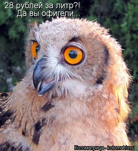 Котоматрица: 28 рублей за литр?!  Да вы офигели...