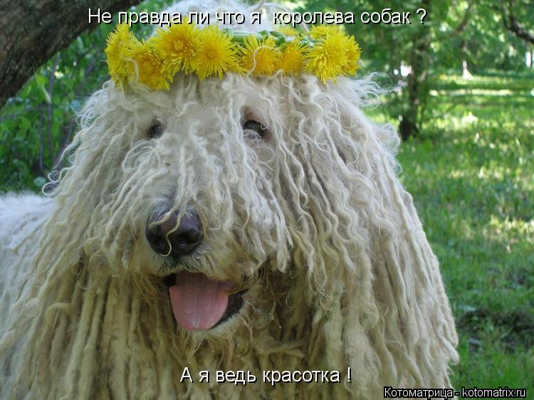 Котоматрица: Не правда ли что я  королева собак ? А я ведь красотка !
