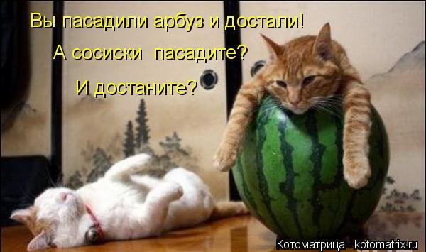 Котоматрица: А сосиски  пасадите? Вы пасадили арбуз и достали! И достаните?