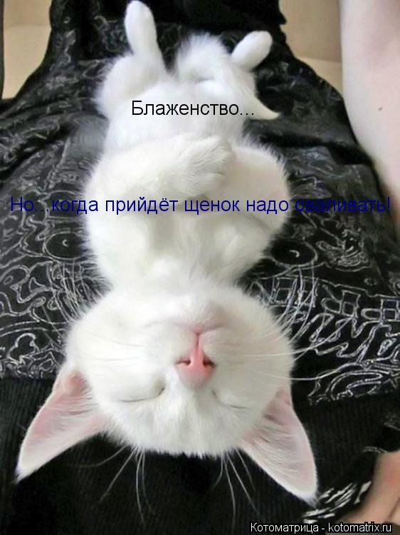 Котоматрица: Блаженство... Но...когда прийдёт щенок надо сваливать!