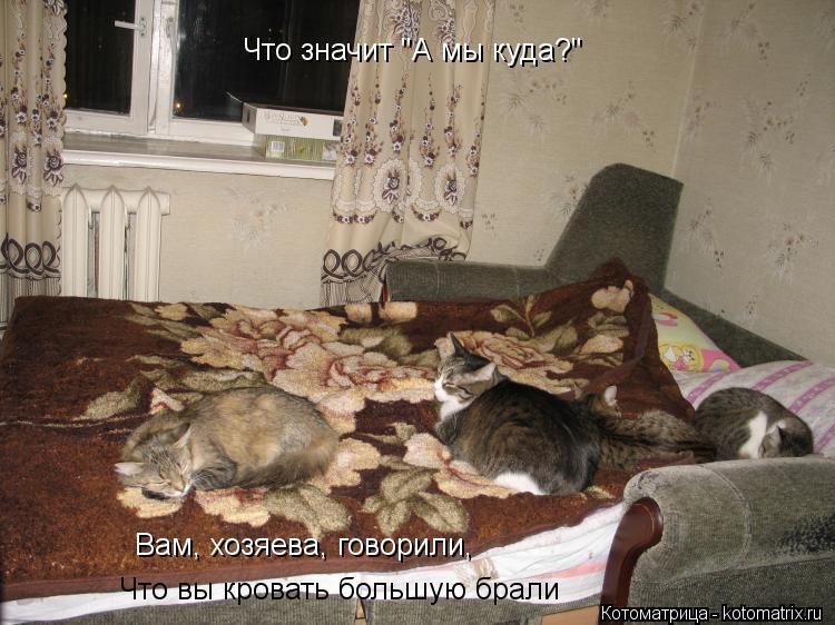 """Котоматрица: Что значит """"А мы куда?"""" Вам, хозяева, говорили, Что вы кровать большую брали"""