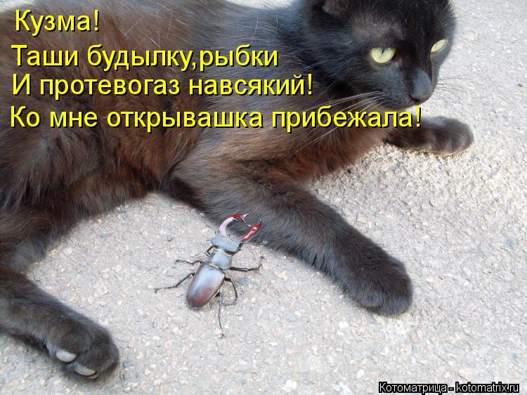 Котоматрица: Таши будылку, Кузма! И протевогаз навсякий! рыбки Ко мне открывашка прибежала!