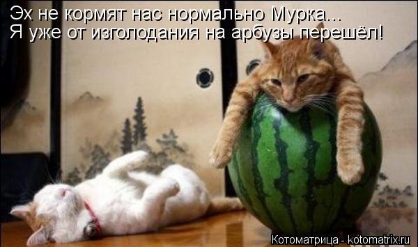 Котоматрица: Эх не кормят нас нормально Мурка... Я уже от изголодания на арбузы перешёл!