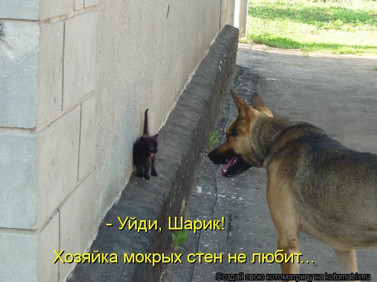 Котоматрица: - Уйди, Шарик! Хозяйка мокрых стен не любит...
