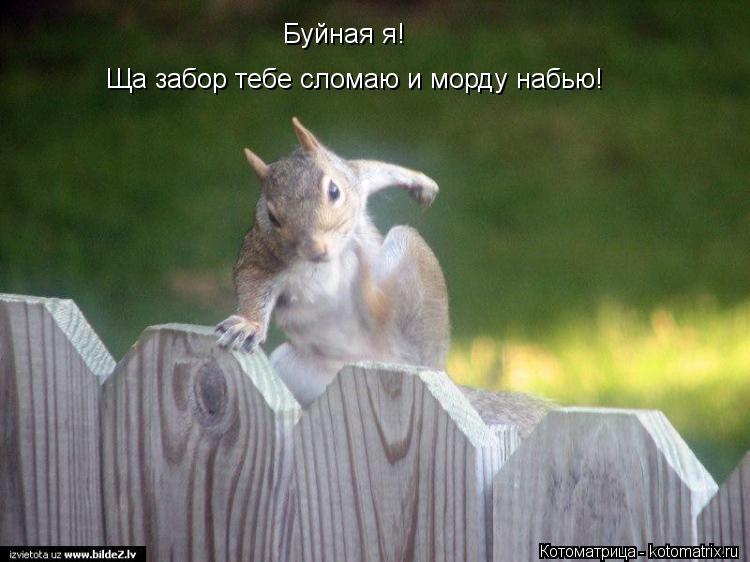 http://kotomatrix.ru/images/lolz/2012/06/07/L5.jpg