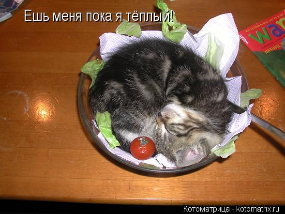 Котоматрица: Ешь меня пока я тёплый!