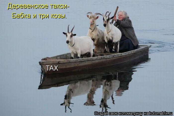 Котоматрица: Деревенское такси- Бабка и три козы. ТАХ