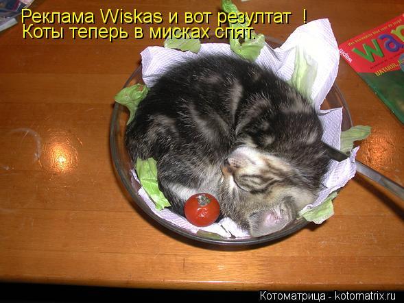 Котоматрица: Реклама Wiskas и вот резултат  ! Коты теперь в мисках спят.