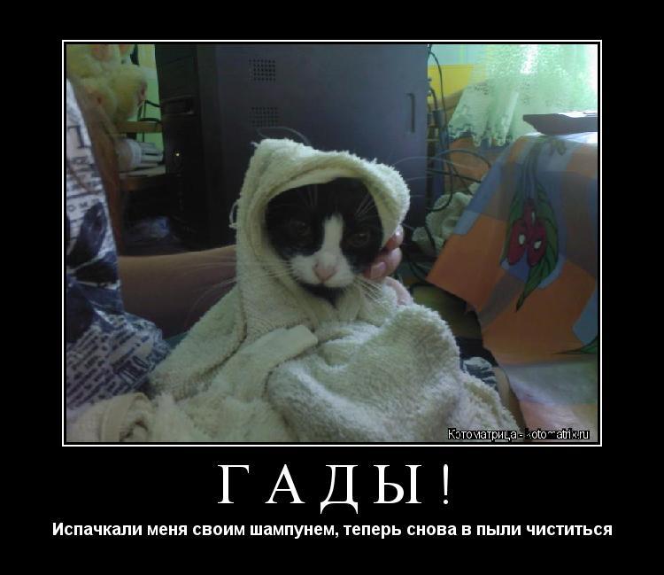 Котоматрица: ГАДЫ! Испачкали меня своим шампунем, теперь снова в пыли чиститься
