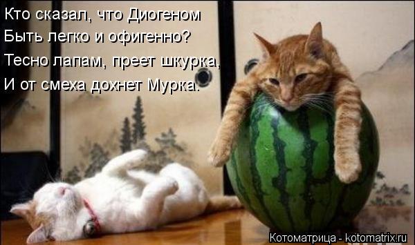 Котоматрица: Кто сказал, что Диогеном  Быть легко и офигенно? Тесно лапам, преет шкурка, И от смеха дохнет Мурка.