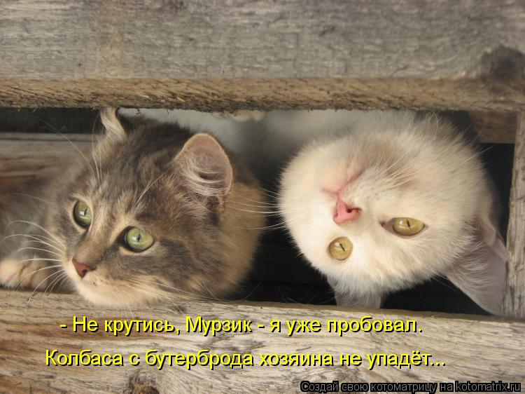 Котоматрица: - Не крутись, Мурзик - я уже пробовал. Колбаса с бутерброда хозяина не упадёт...