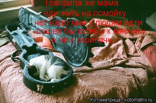 Котоматрица: Говорила же мама иди жить на помойку  нет надо мне к людям идти пошел бы хотябы к мяснику а не к скрипачу...