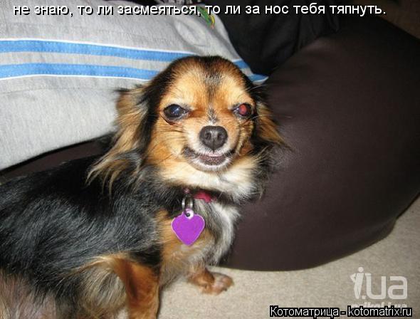 Котоматрица: не знаю, то ли засмеяться, то ли за нос тебя тяпнуть.