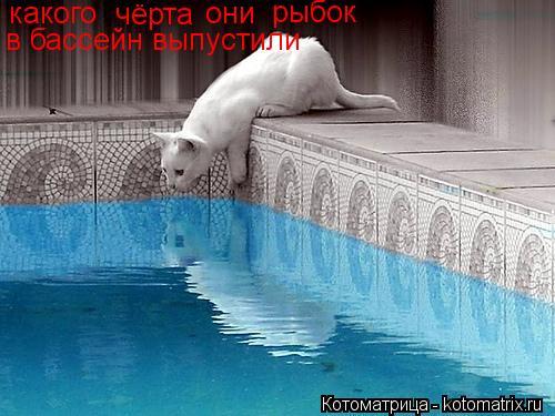 Котоматрица: какого чёрта они рыбок в бассейн выпустили