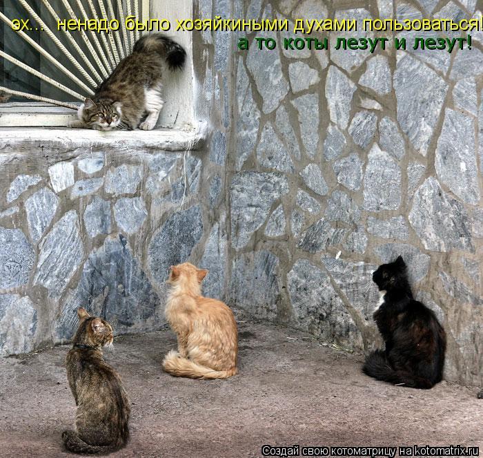 Котоматрица: эх...  ненадо было хозяйкиными духами пользоваться! а то коты лезут и лезут!