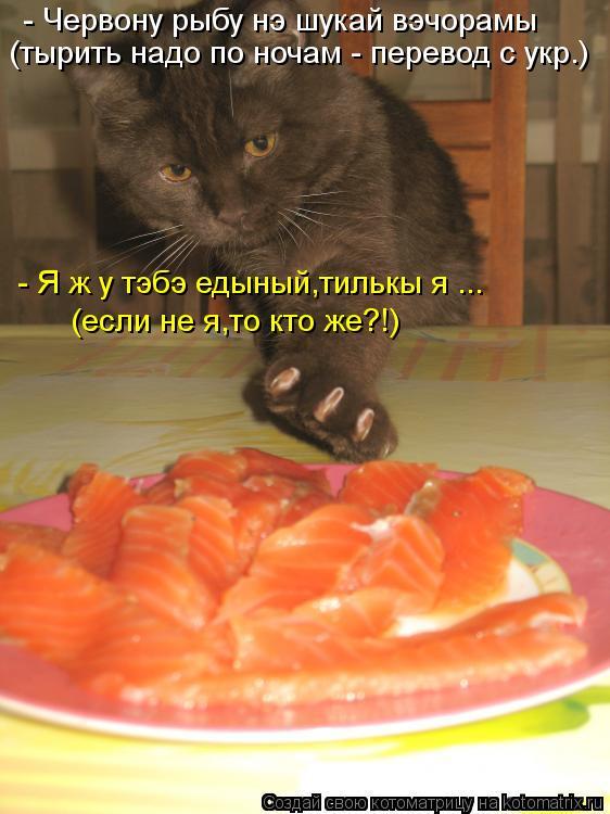 Котоматрица: - Червону рыбу нэ шукай вэчорамы (тырить надо по ночам - перевод с укр.) - Я ж у тэбэ едыный,тилькы я ... (если не я,то кто же?!)