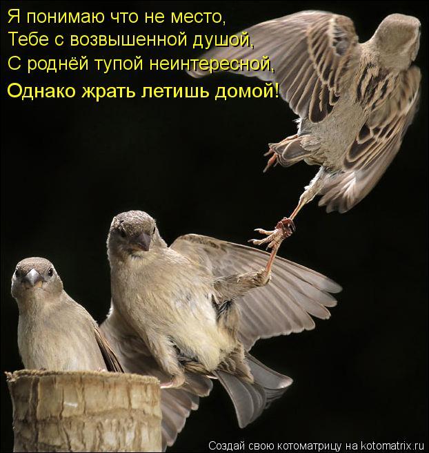 Котоматрица: Я понимаю что не место, Тебе с возвышенной душой, С роднёй тупой неинтересной, Однако жрать летишь домой!