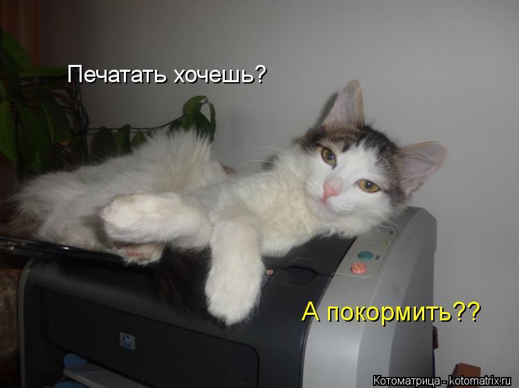 Котоматрица: Печатать хочешь? А покормить??