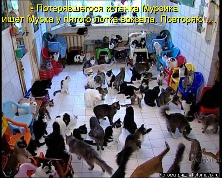 Котоматрица: - Потерявшегося котенка Мурзика ищет Мурка у пятого лотка вокзала. Повторяю.....