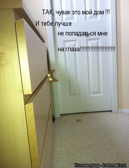 Котоматрица: ТАК, чувак это мой дом !!! И тебе лучше не попадаться мне на глаза!!!!!!!!!!!!!!!!!!!!!!!