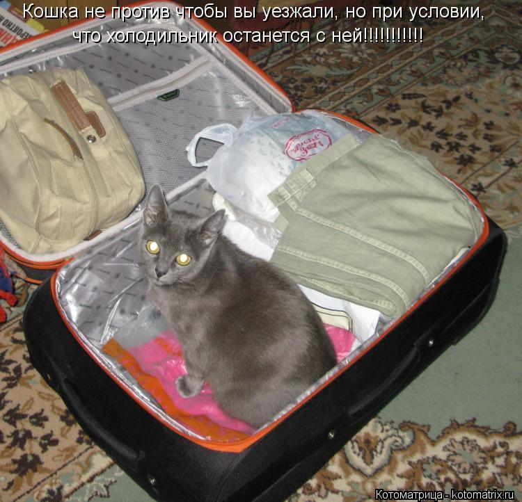 Котоматрица: Кошка не против чтобы вы уезжали, но при условии, что холодильник останется с ней!!!!!!!!!!!