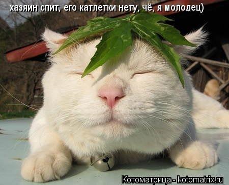 Котоматрица: хазяин спит, его катлетки нету, чё, я молодец)
