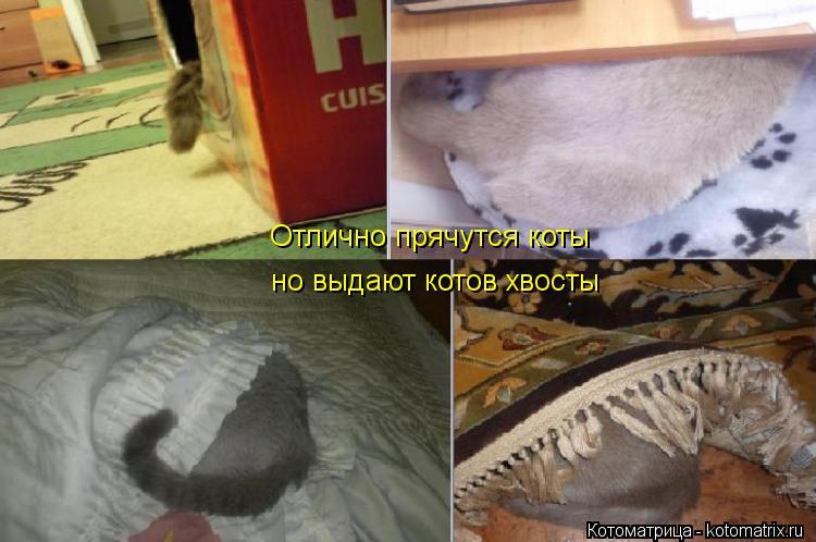 Котоматрица: Отлично прячутся коты но выдают котов хвосты