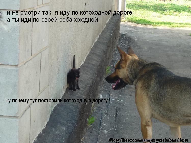 Котоматрица: ну почему тут построили котоходную дорогу ! - - и не смотри так  я иду по котоходной дороге а ты иди по своей собакоходной!