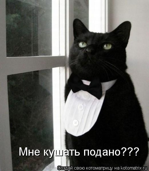Котоматрица: Мне кушать подано???