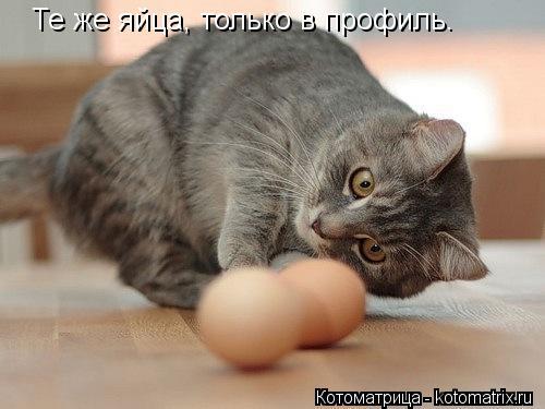 Котоматрица: Те же яйца, только в профиль.