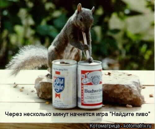 """Котоматрица: Через несколько минут начнется игра """"Найдите пиво"""""""