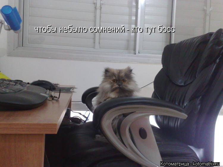 Котоматрица: чтобы небыло сомнений - кто тут босс