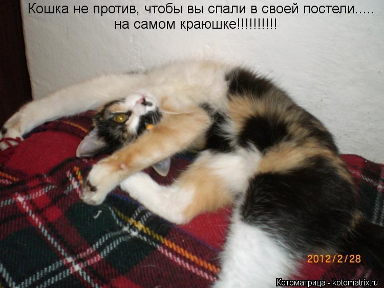 Котоматрица: Кошка не против, чтобы вы спали в своей постели..... на самом краюшке!!!!!!!!!!