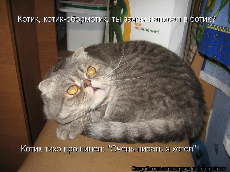 """Котоматрица: Котик, котик-обормотик, ты зачем написал в ботик?  Котик тихо прошипел: """"Очень писать я хотел"""""""