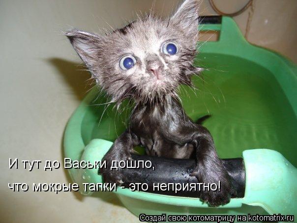 Котоматрица: И тут до Васьки дошло,  что мокрые тапки - это неприятно!