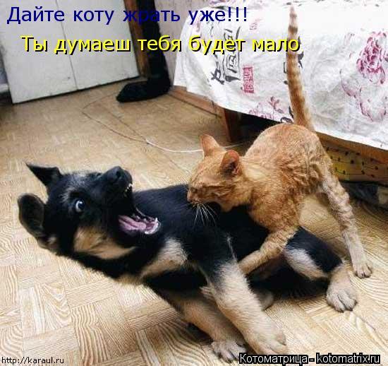 Котоматрица: Дайте коту жрать уже!!! Ты думаеш тебя будет мало