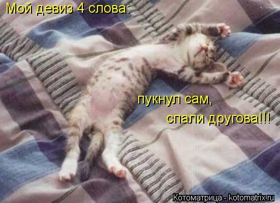 Котоматрица: Мой девиз 4 слова: пукнул сам,  спали другова!!!