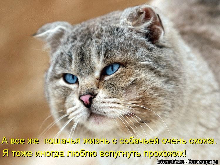 Котоматрица: Я тоже иногда люблю вспугнуть прохожих! А все же  кошачья жизнь с собачьей очень схожа.
