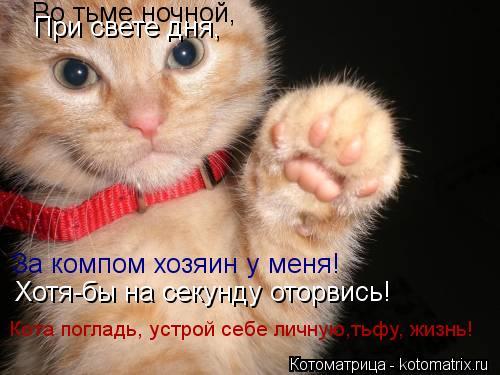 Котоматрица: Во тьме ночной, При свете дня, За компом хозяин у меня! Хотя-бы на секунду оторвись! Кота погладь, устрой себе личную,тьфу, жизнь!