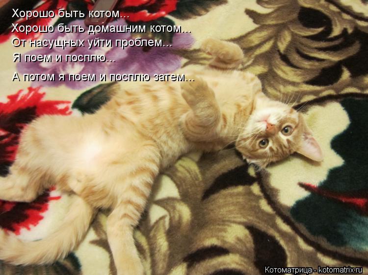 Котоматрица: Хорошо быть котом... Хорошо быть домашним котом... От насущных уйти проблем... А потом я поем и посплю затем... Я поем и посплю...