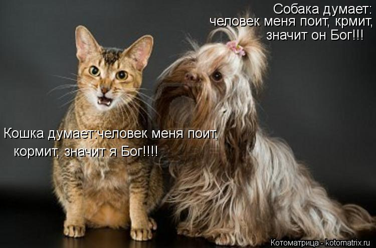 Котоматрица: Собака думает: человек меня поит, крмит, Кошка думает:человек меня поит, кормит, значит я Бог!!!! значит он Бог!!!