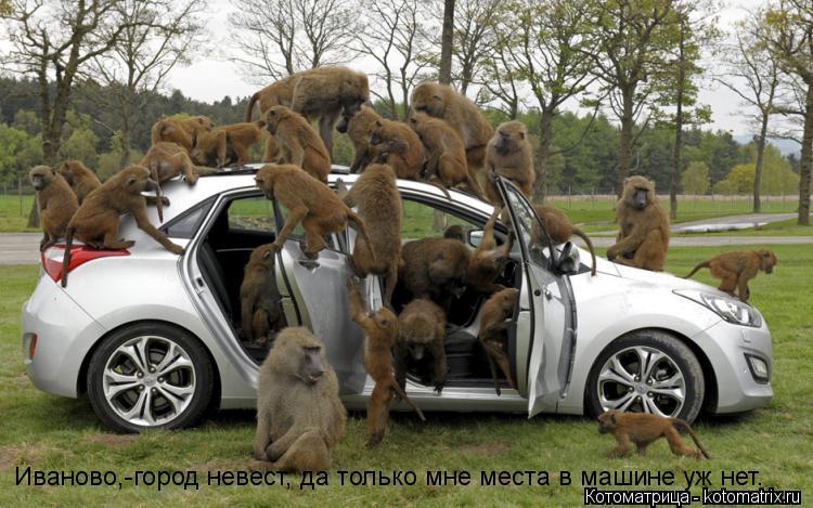 Котоматрица: Иваново,-город невест, да только мне места в машине уж нет. Иваново,-город невест, да только мне места в машине уж нет.