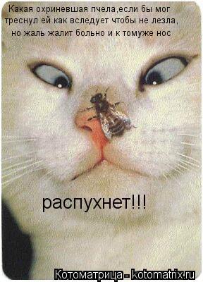 Котоматрица: Какая охриневшая пчела,если бы мог  но жаль жалит больно и к томуже нос  распухнет!!! треснул ей как вследует чтобы не лезла,
