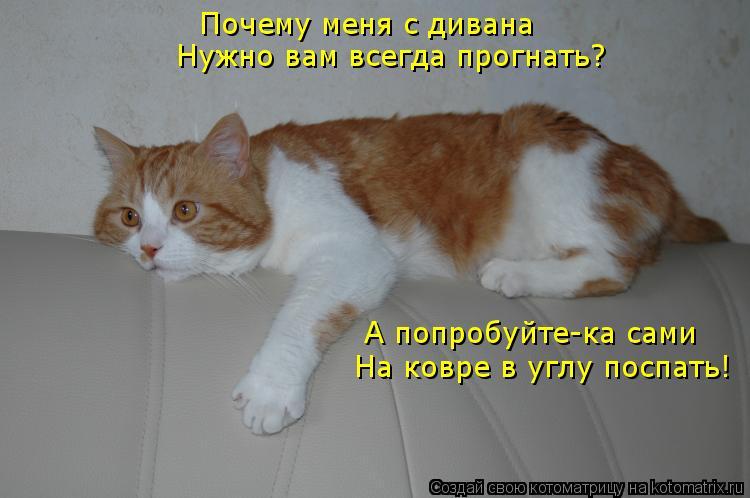 Котоматрица: Почему меня с дивана  Нужно вам всегда прогнать? А попробуйте-ка сами На ковре в углу поспать!