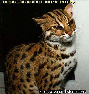 Котоматрица: Да не кошка я ! Меня просто плохо кормили, а так я леопард